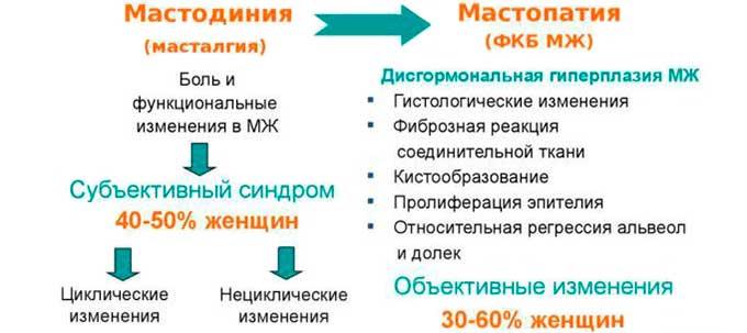 схема развития мастодинии