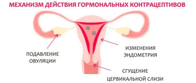 Механизм действия противозачаточных препаратов