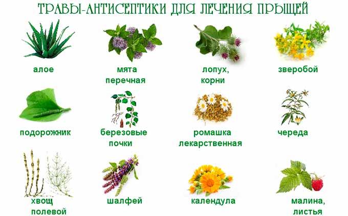 Травы-антисептики для лечения прыщей