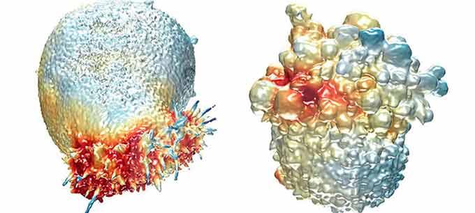 Распадающиеся клетки опухоли