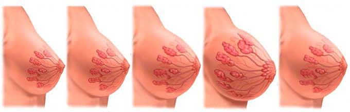 Изменение молочных желез во время беременности