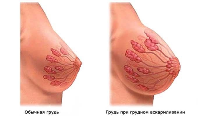 Грудь женщины до и после родов